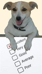 Best dog food ratings