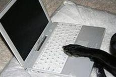 Dog's paw on laptop
