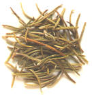 Dried rosemary, pet food neurotoxin