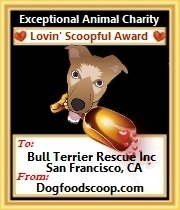 Dog Food Scoop animal charity award