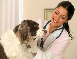 Dog and Veterinarian