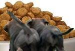 Dog Food Reviews Consumer Reports