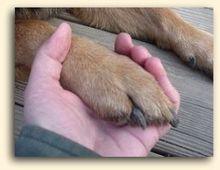 Holding dog's paw