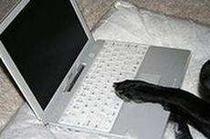 Dog's paw on laptop