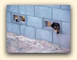 Two dogs peeking through wall