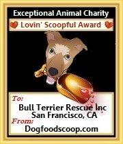 Dog Food Scoop animal charity award