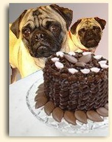 Two pugs and chocolate cake