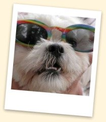 Shih Tzu - Scoop Dog Photo Contest